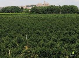 La Paeria amplia el termini d'aportacions a la futura Ordenança de l'Horta