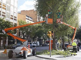 Imatge de la notícia La Paeria realitza treballs d'esporga en prop de 15.000 arbres a Lleida