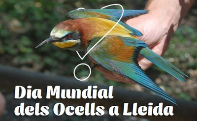 Dia Mundial dels ocells als aiguamolls de Rufea - Diumenge, 6 d'octubre 2019