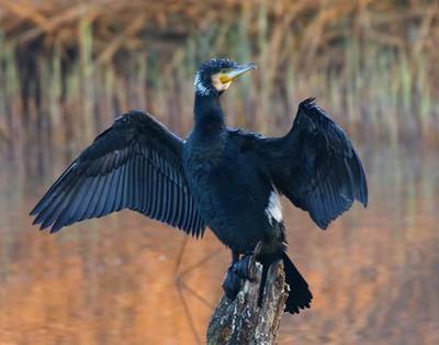 Imatge del event Ecodescoberta. Visita guiada a la Mitjana. Els ocells migradors