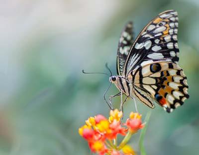 Imatge del event Punt d'observació +Biodiversitat. Les papallones de la ciutat