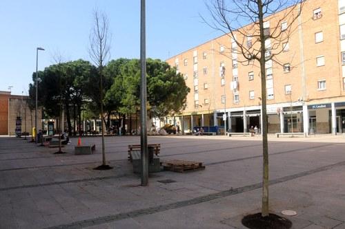 Imatge de la notícia La Paeria renova tot l'arbrat de la plaça de Sant Pere amb 16 lledoners