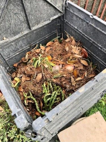 Imatge de la notícia 62 famílies i 5 escoles aprenen a compostar els residus orgànics
