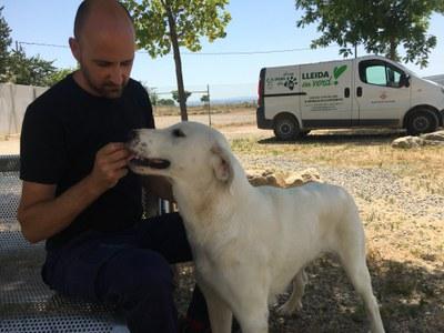 """""""El Refugi dels Peluts"""", nou nom per al Centre d'Acollida d'Animals de Companyia de Lleida"""