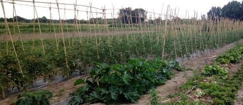 Imatge de la notícia El Viver d'Agricultors de Rufea incorpora dos nous projectes ecològics amb component social