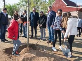 Els alumnes de l'Escola de Magraners planten els arbres de la reforma del pati que ells mateixos van idear