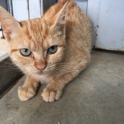 La Paeria fa una crida a la ciutadania per adoptar gats del Refugi dels Peluts