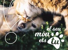 Imatge de la notícia La Paeria posa en marxa el projecte per controlar les colònies de gats