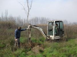La Paeria ultima la millora ambiental dels Aiguamolls de Rufea amb la plantació de més de 900 arbres i arbustos