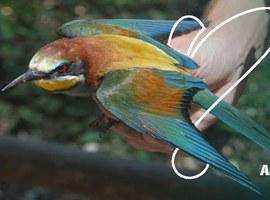 Lleida commemora el Dia Mundial dels Ocells