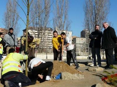 Es planten 10 freixes al nou parc dels Camps Elisis