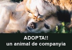 Adopcio animals de companyia