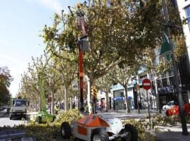 La Paeria realitza treballs d'esporga en prop de 15.000 arbres de la ciutat