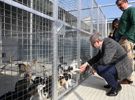 Lleida avança en millores per ser una ciutat amiga dels animals de companyia